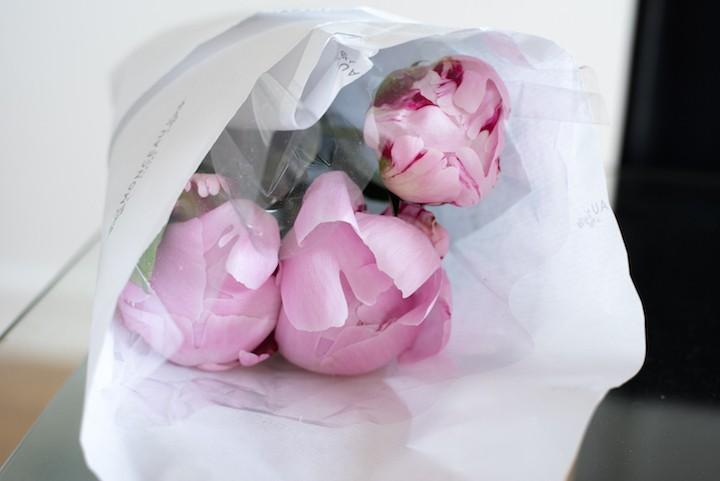 pink peonies 1